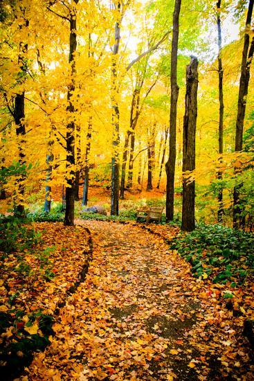 Autumn Pathway IV-Beth Wold-Photographic Print