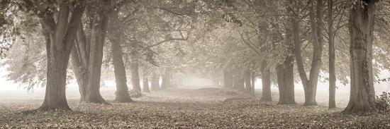 Autumn Pathway-Assaf Frank-Giclee Print