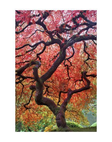 Autumn Patriarch-Dennis Frates-Art Print