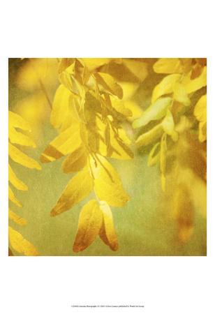 https://imgc.artprintimages.com/img/print/autumn-photography-ii_u-l-f8facj0.jpg?p=0