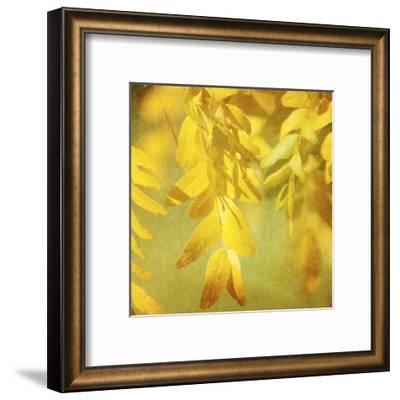 Autumn Photography II-Sylvia Coomes-Framed Art Print