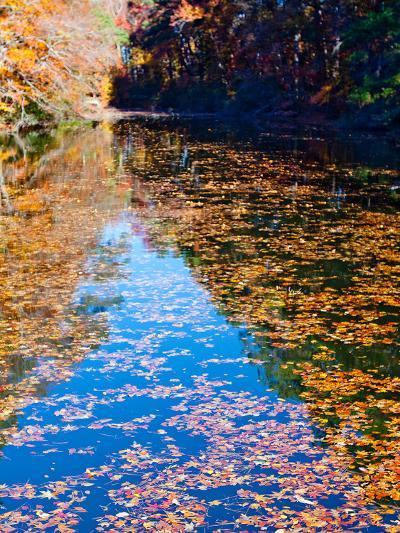 Autumn Reflecting in Lake Maury-Jason Copes-Photographic Print