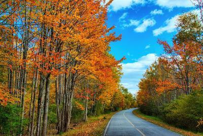 Autumn Road, Acadia National Park, Maine-Vincent James-Photographic Print