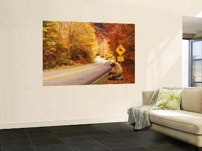 Autumn Road with Bear at Deer Crossing Sign, Vermont, USA--Giant Art Print