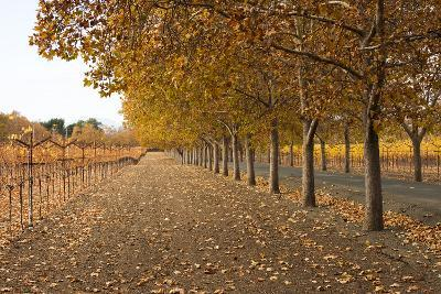 Autumn Rows-Lance Kuehne-Photographic Print