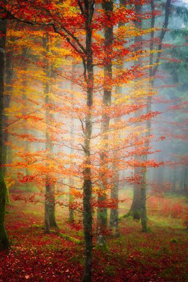 Autumn's End-Philippe Sainte-Laudy-Photographic Print