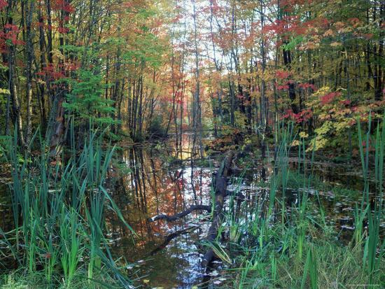 Autumn Scene in Woodland with Stream, Wisconsin, USA-Larry Michael-Photographic Print