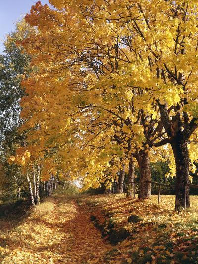 Autumn Scenery, Country Lane, Broad-Leaved Trees-Thonig-Photographic Print