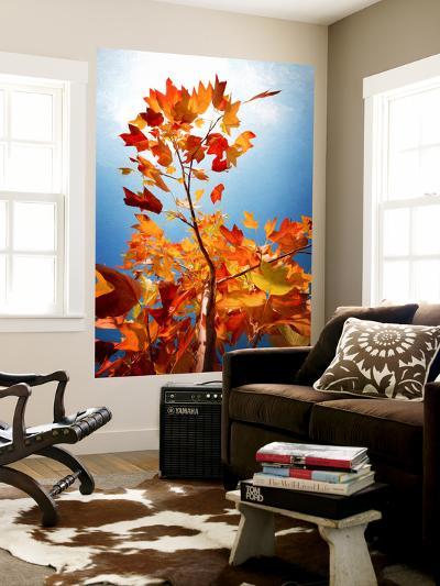 Autumn Serenade-Philippe Sainte-Laudy-Wall Mural