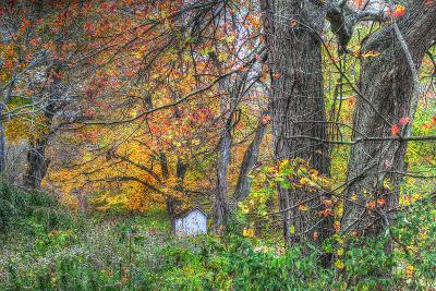 Autumn Shed-Robert Goldwitz-Photographic Print