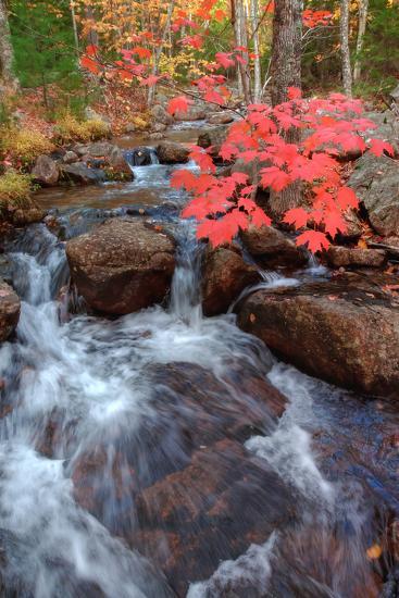 Autumn Stream Through Acadia-Vincent James-Photographic Print