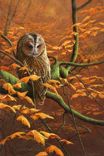 Autumn Tawny Owl-Jeremy Paul-Giclee Print