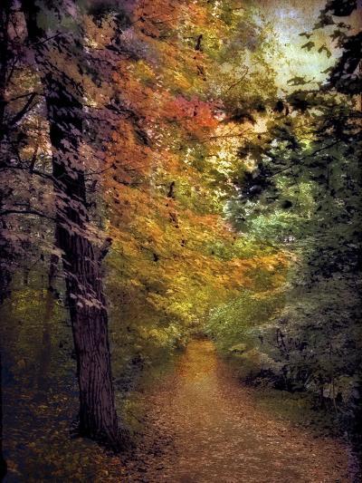 Autumn Trail-Jessica Jenney-Photographic Print