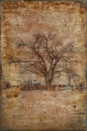 https://imgc.artprintimages.com/img/print/autumn-tree-duo_u-l-q12v1w50.jpg?p=0