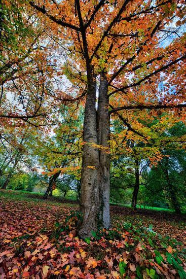 Autumn Tree Splendor, Hoyt Aboretum Portland Oregon-Vincent James-Photographic Print