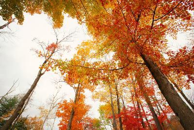 Autumn Tree Tops, Lincoln New Hampshire, Kancamagus-Vincent James-Photographic Print