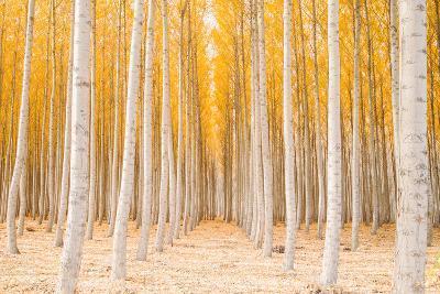 Autumn Tree World, Light Sun and Trees, Eastern Oregon-Vincent James-Photographic Print