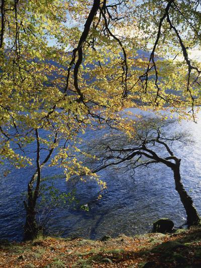 Autumn Trees at Ullswater, Lake District National Park, Cumbria, England, United Kingdom, Europe-Rainford Roy-Photographic Print