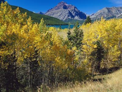 Autumn Trees in Glacier National Park-Craig Tuttle-Photographic Print
