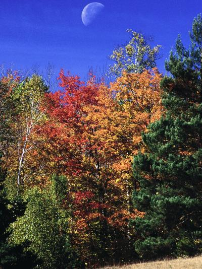 Autumn Trees with Moon, Vermont-Russell Burden-Photographic Print