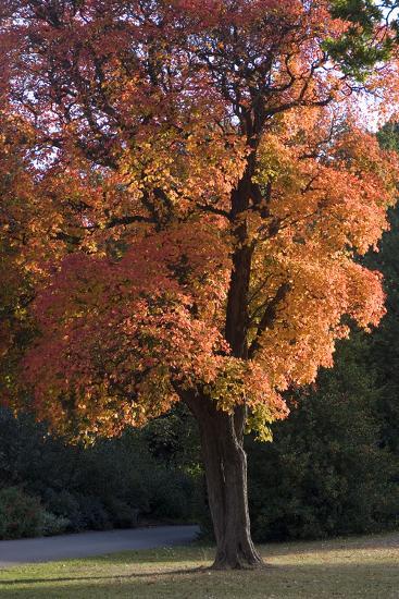 Autumn Trees-Natalie Tepper-Photo