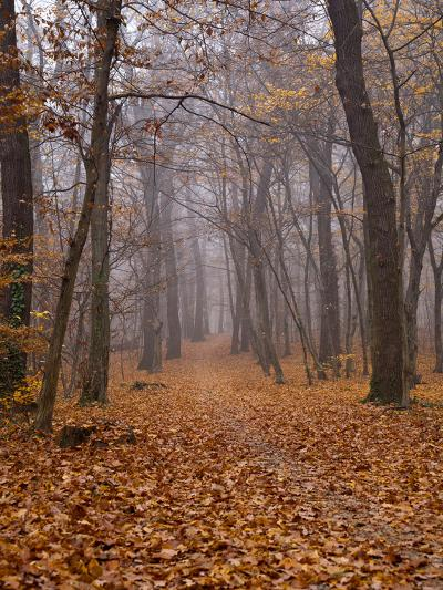 Autumn-Maja Hrnjak-Art Print