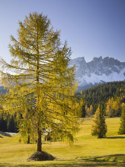 Autumnal Alp in Front of the Mountain Latemar, Kšlbleggiesen, Near Niger Pass, Larch, South Tyrol-Rainer Mirau-Photographic Print