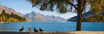 Autumnal Lake Wakatipu at Queenstown, Otago, South Island, New Zealand, Pacific-Matthew Williams-Ellis-Photographic Print