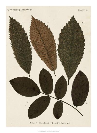 Autumnal Leaves I-Vision Studio-Giclee Print