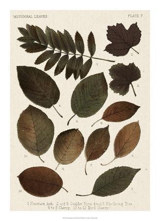 https://imgc.artprintimages.com/img/print/autumnal-leaves-ii_u-l-f8hsmb0.jpg?p=0