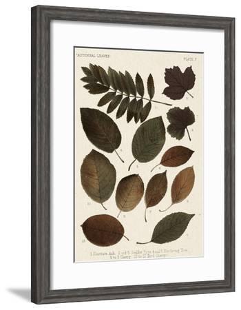 Autumnal Leaves II-Vision Studio-Framed Giclee Print