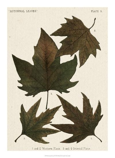 Autumnal Leaves IV-Vision Studio-Giclee Print