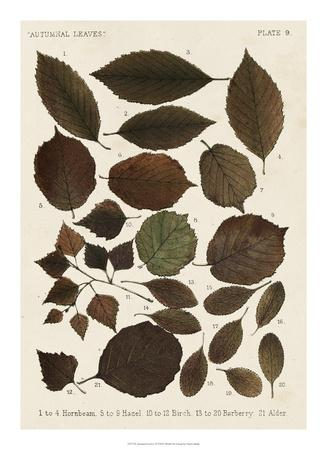 https://imgc.artprintimages.com/img/print/autumnal-leaves-vi_u-l-f8hsnr0.jpg?p=0