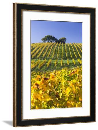 Autumnal Vineyards Between Gumpoldskirchen and Baden Bei Wien, Vienna Basin, Lower Austria, Austria-Rainer Mirau-Framed Photographic Print
