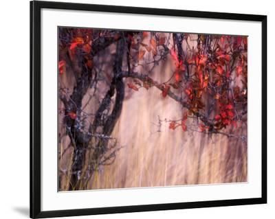 Autumnal-Ursula Abresch-Framed Giclee Print