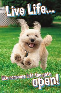 Avanti - Dog Joy