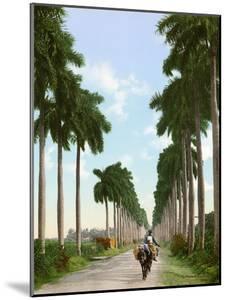 Avenue of Palms, Havana, 1903