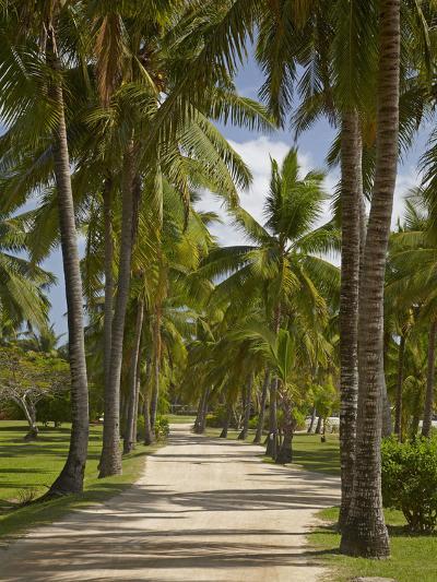 Avenue of Palms, Musket Cove Island Resort, Malolo Lailai Island, Mamanuca Islands, Fiji-David Wall-Photographic Print