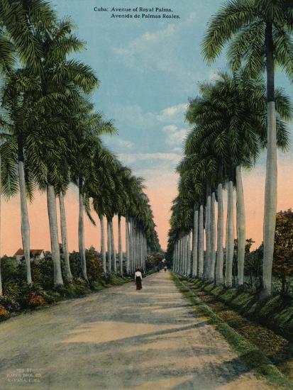Avenue of royal palms, Cuba, c1920-Unknown-Photographic Print