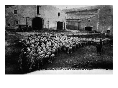 """""""Aveyron.394.Roquefort, Leaving a Flock of Sheep """"--Giclee Print"""
