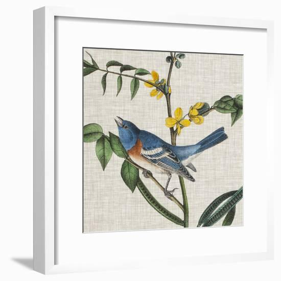 Avian Crop VIII-John James Audubon-Framed Giclee Print