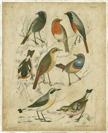 https://imgc.artprintimages.com/img/print/avian-gathering-i_u-l-f5joeo0.jpg?p=0