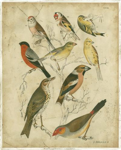Avian Gathering II-G^ Lubbert-Art Print