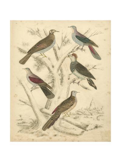 Avian Habitat I-Milne-Art Print