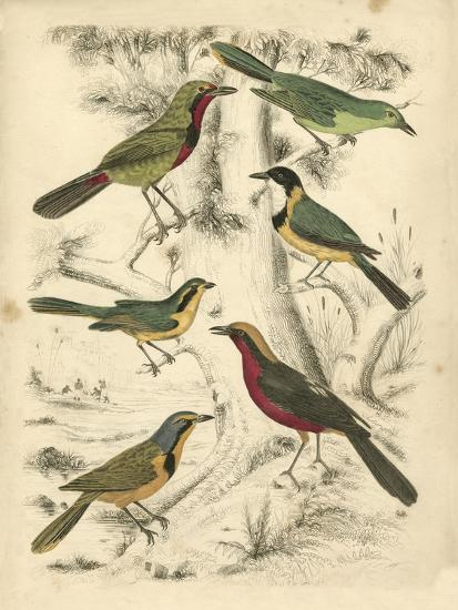 Avian Habitat III-Milne-Art Print