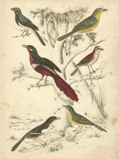 Avian Habitat IV-Milne-Art Print