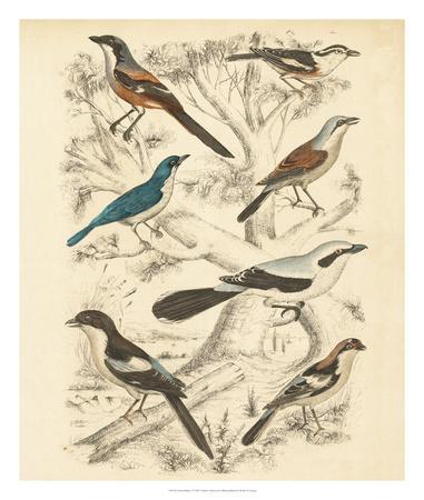 https://imgc.artprintimages.com/img/print/avian-habitat-v_u-l-f8hsns0.jpg?p=0