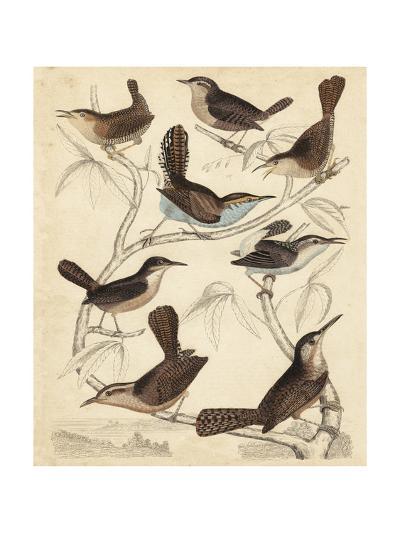 Avian Habitat VI-Milne-Art Print