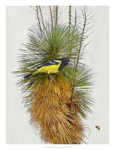 Avian Tropics II-Chris Vest-Giclee Print