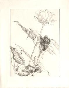 Deux roses by Avigdor Arikha